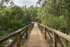Powell-Julie_Noojee Trestle Bridge-8