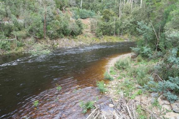 JuliePowell_Franklin River-2