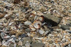 Kelvedon Beach