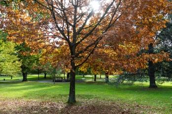 JuliePowell_Launceston City Park