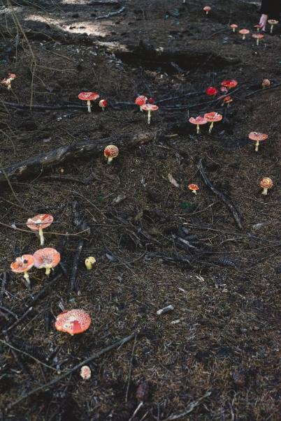 Toadstools near Liffey