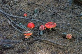 Toadstools near Liffey