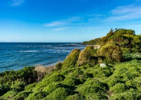 Lillico beach Little Penguin Conservation Area