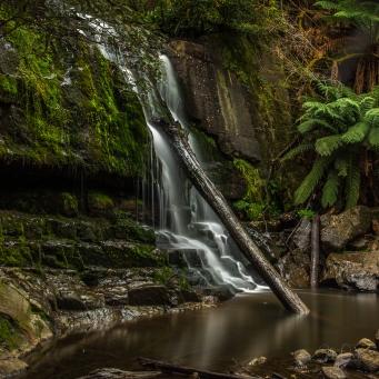 JuliePowell_Lilydale Falls-6