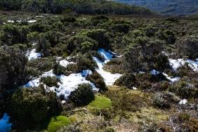 Wombat Moor, Mount Field NP