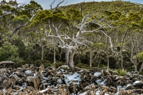 JuliePowell_Mount Wellington-23