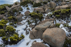 JuliePowell_Mount Wellington-6
