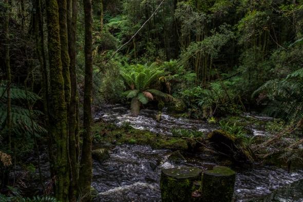 JuliePowell_Nelson Falls-22