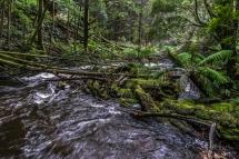 JuliePowell_Nelson Falls-24