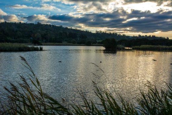 JuliePowell_Tamar Valley Wetlands-10