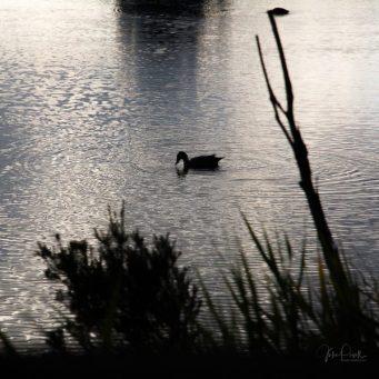 JuliePowell_Tamar Valley Wetlands-11