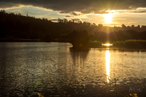 JuliePowell_Tamar Valley Wetlands-13