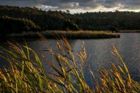 JuliePowell_Tamar Valley Wetlands-14