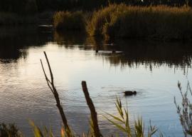 JuliePowell_Tamar Valley Wetlands-15