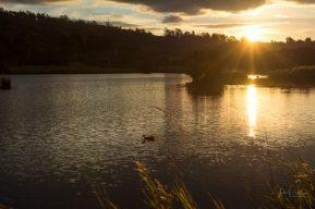 JuliePowell_Tamar Valley Wetlands-17