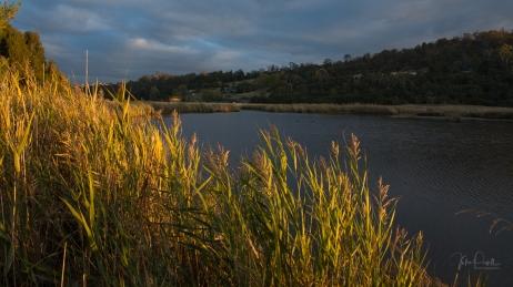 JuliePowell_Tamar Valley Wetlands-18