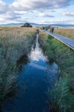 JuliePowell_Tamar Valley Wetlands-2
