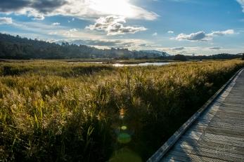 JuliePowell_Tamar Valley Wetlands-3