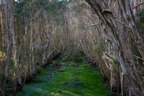 JuliePowell_Tamar Valley Wetlands-8
