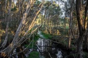 JuliePowell_Tamar Valley Wetlands-9