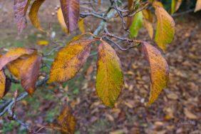 JuliePowell_Pirianda Gardens-11