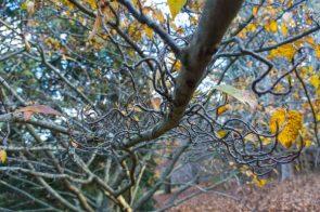 JuliePowell_Pirianda Gardens-12