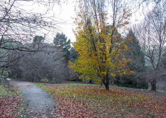 JuliePowell_Pirianda Gardens-16