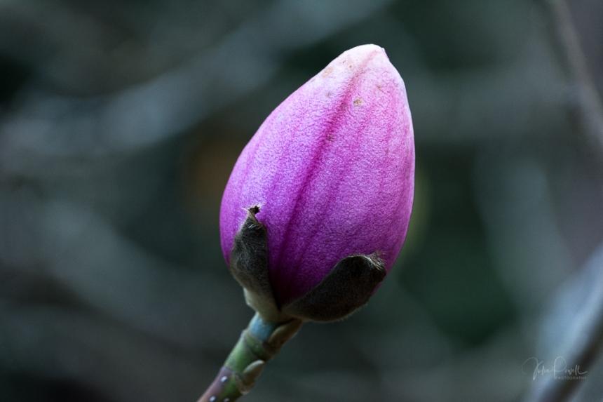 JuliePowell_Pirianda Gardens-18