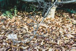 JuliePowell_Pirianda Gardens-2