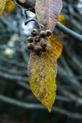 JuliePowell_Pirianda Gardens-3