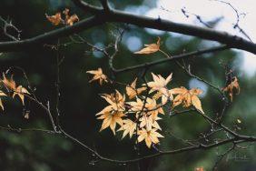 JuliePowell_Pirianda Gardens-31