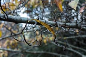 JuliePowell_Pirianda Gardens-4