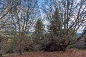 JuliePowell_Pirianda Gardens-8