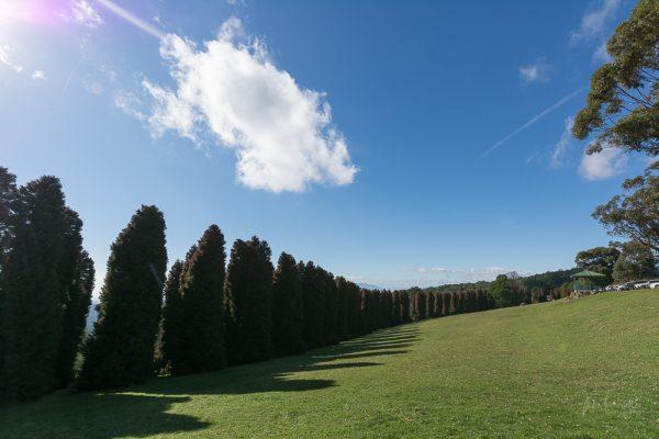 JuliePowell_RJ Hamer Arboretum-13