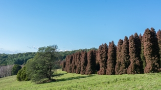 JuliePowell_RJ Hamer Arboretum-3
