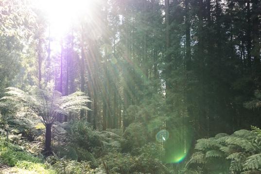 JuliePowell_RJ Hamer Arboretum-6
