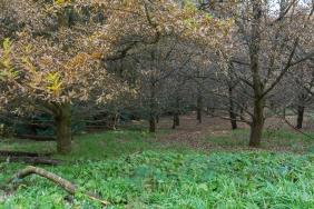JuliePowell_RJ Hamer Arboretum-8