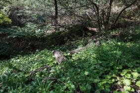 JuliePowell_RJ Hamer Arboretum-9