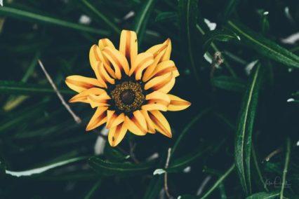 JuliePowell_Toobarac-10