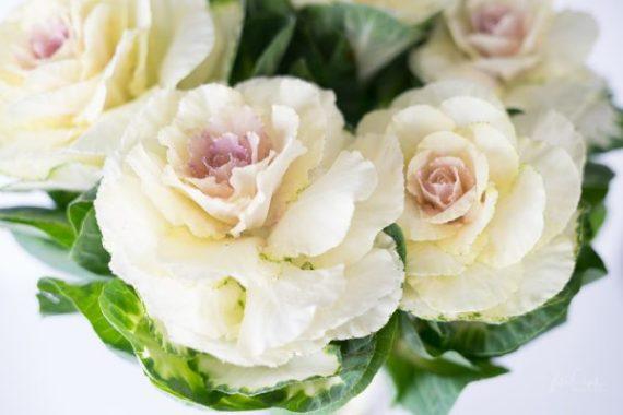JuliePowell_Cabbage Rose_Light-4