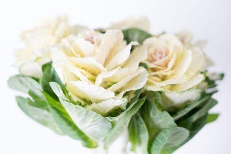 JuliePowell_Cabbage Rose_Light