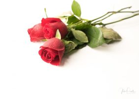 JuliePowell_Red Roses-10