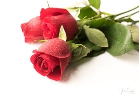 JuliePowell_Red Roses-11