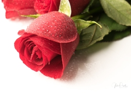 JuliePowell_Red Roses-12