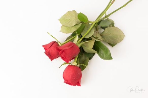 JuliePowell_Red Roses-19