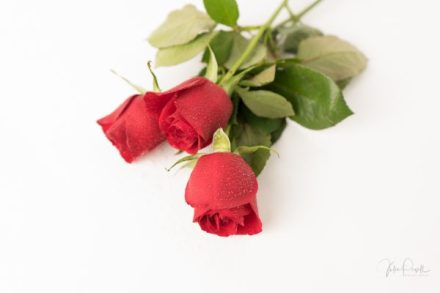 JuliePowell_Red Roses-20