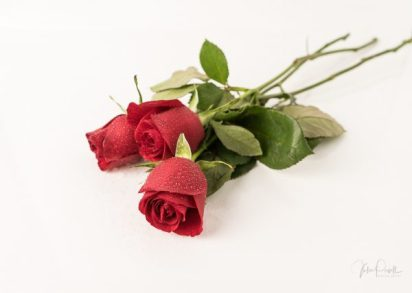 JuliePowell_Red Roses-21
