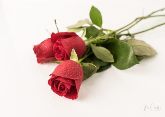 JuliePowell_Red Roses-22