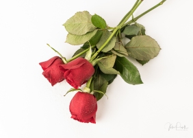 JuliePowell_Red Roses-23