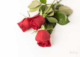JuliePowell_Red Roses-24